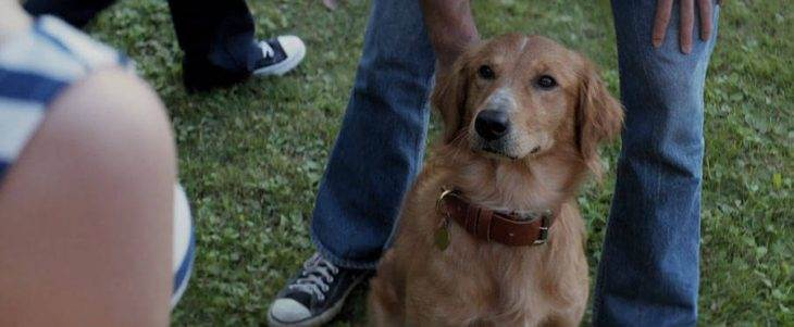 'A Dog's Purpose' Trailer: Amblin's Next Movie Is About a
