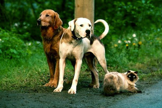 Movies With Extremely Happy Endings Homeward Bound