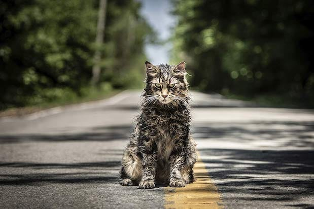 Pet Sematary Leo the Cat
